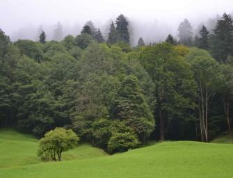 Walderhalt und Wiederaufbau von Wäldern ist Klima- und Artenschutz